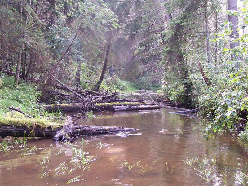 Gliemeņu upe